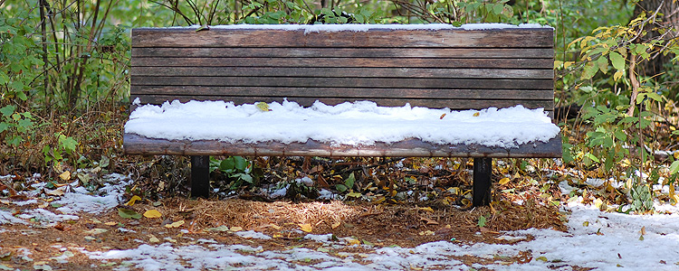 Early October 2009 Snowfall At Eloise Butler