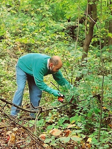 Cary cutting buckthorn